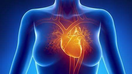 妊婦 心臓