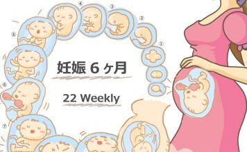 妊娠22週