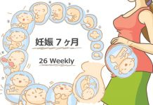 妊娠26週