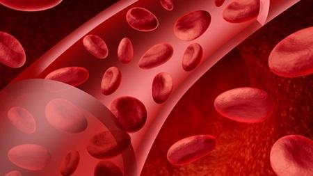 妊婦は血液量が増える
