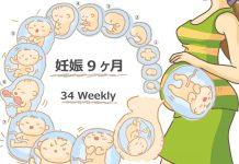 妊娠34週