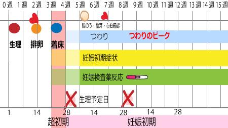 超妊娠初期、妊娠初期の表