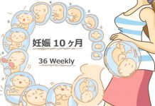 妊娠36週