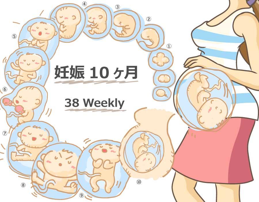 38 週 胎児 体重 平均