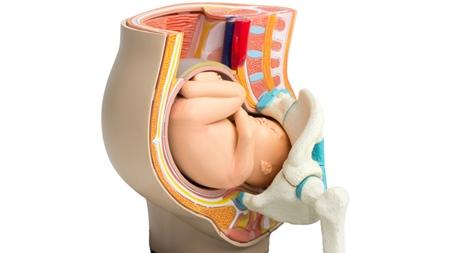 骨盤、赤ちゃん