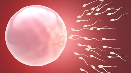 卵子が受精できるタイムリミット