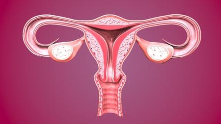 プロゲステロン(黄体ホルモン)のはたらき