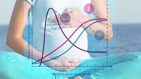妊娠に伴うホルモン分泌の変化