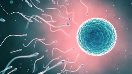 精子の性質とは?