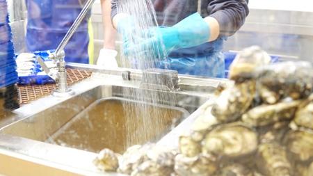 販売用の牡蠣を食べること
