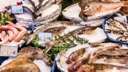 魚介類に含まれる水銀について