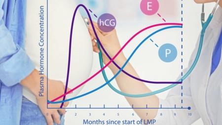 プロゲステロンの分泌の影響