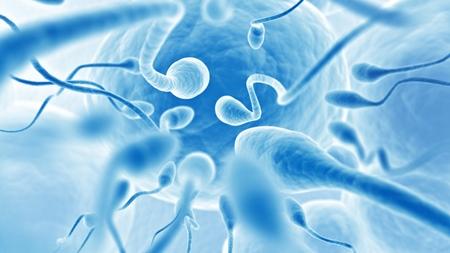 精子のイメージ
