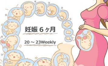 妊娠6ヶ月