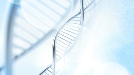 遺伝子の影響
