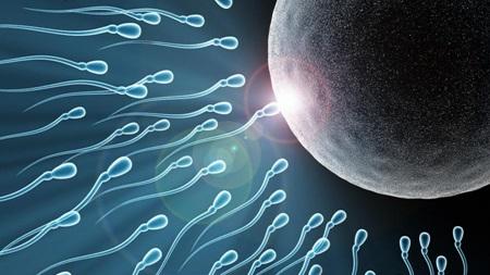 自然妊娠と体外受精
