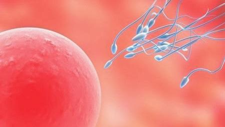 卵子の老化はなぜ起きるのか