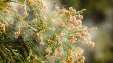 花粉対策について