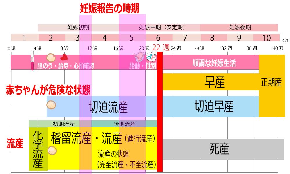 会社に妊娠報告する時期の表
