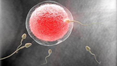 受精の瞬間に性別は決定済み