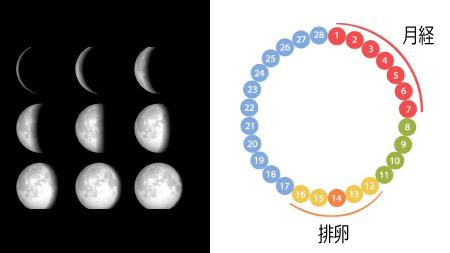 月の満ち欠けは女性の生理周期と同じ