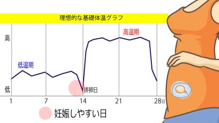確実に妊娠を判断したい時は基礎体温を計って