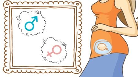 この時期に赤ちゃんの性別が決まる